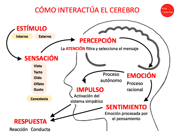 Neurodiseño.-Arte-Casellas.-Tipos-de-diseño.-Definición.-Caracteristicas-ejemplos-2